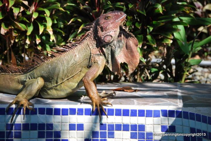 This lovely fellow gave us a nice, long poolside photo session