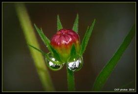 Tears of joy for the rain...