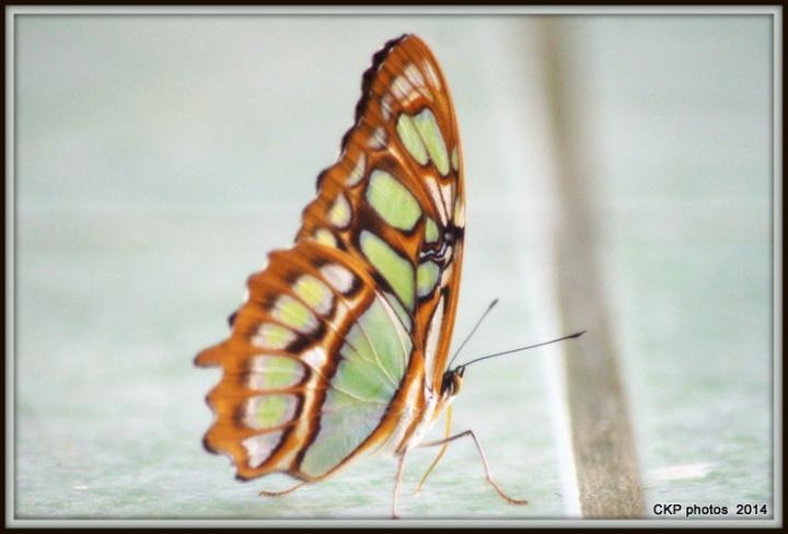 arachnaday in June 2014 021.NEF