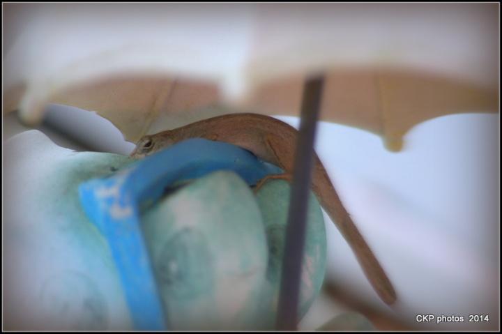 wild things daytona beach october 012.NEF