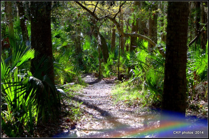 Bulow and Tomoka State Park feb 2015 050.NEF