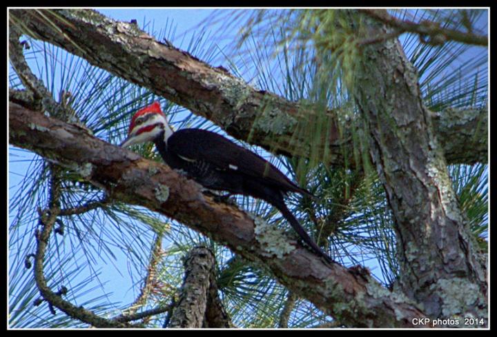 Bulow and Tomoka State Park feb 2015 089.NEF
