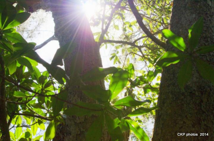 Bulow and Tomoka State Park feb 2015 108.NEF