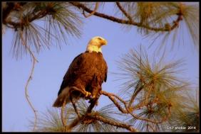 the eagle has landed 026.NEF