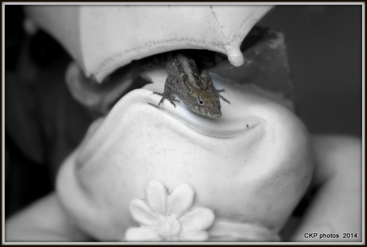 lizard shoot and roses 032.NEF - Copy
