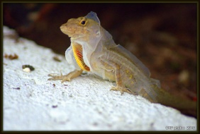 lizards and roses and things 057.NEF