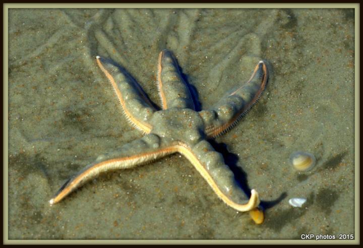 starfish and blooms 077.NEF