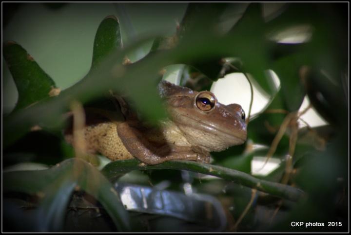 frog prince sat june 2015 002.NEF