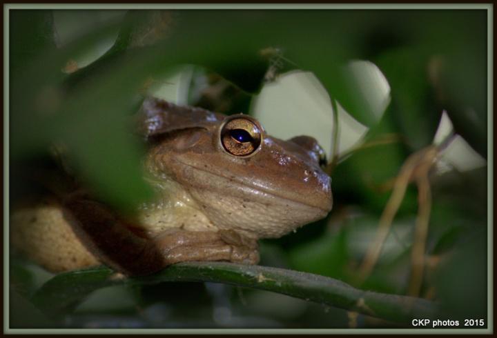 frog prince sat june 2015 003.NEF
