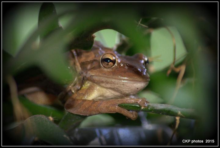 frog prince sat june 2015 010.NEF