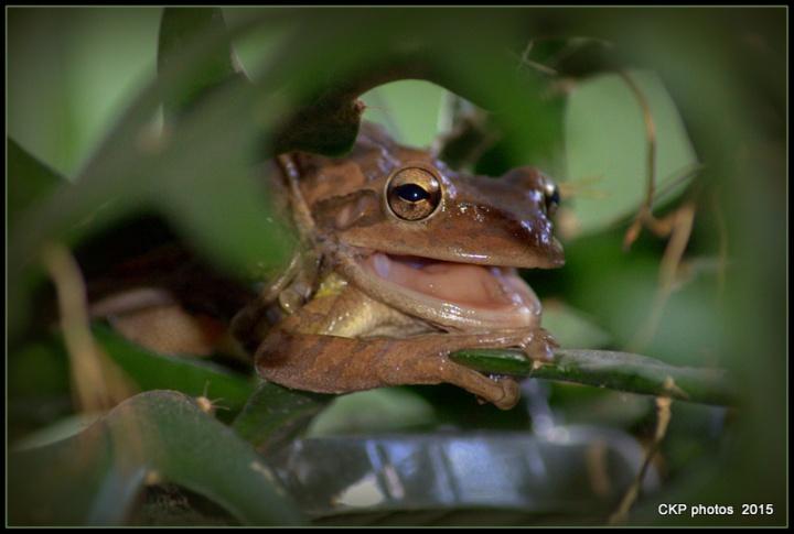 frog prince sat june 2015 011.NEF