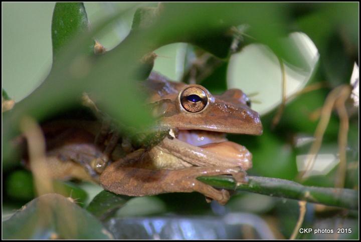 frog prince sat june 2015 013.NEF