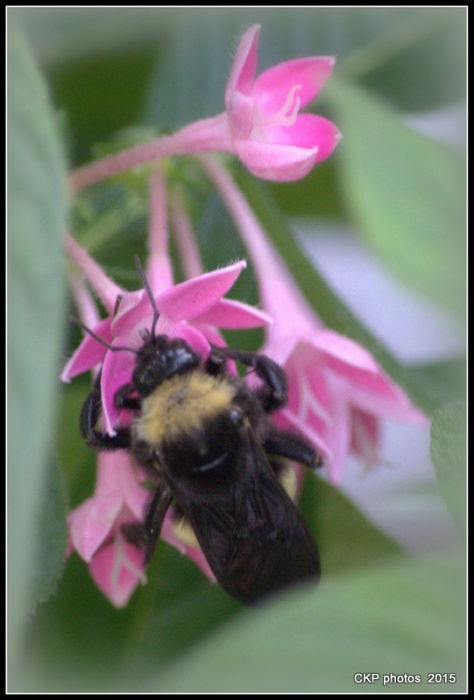 bees birds and spiders aug 2015 020.NEF