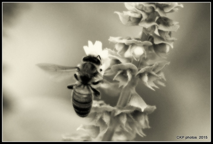 summer 2015 birds and blooms 004.NEF