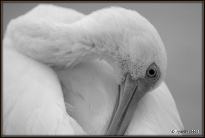 moon and pond birds oct 2015 080.NEF