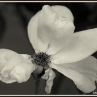 Paler