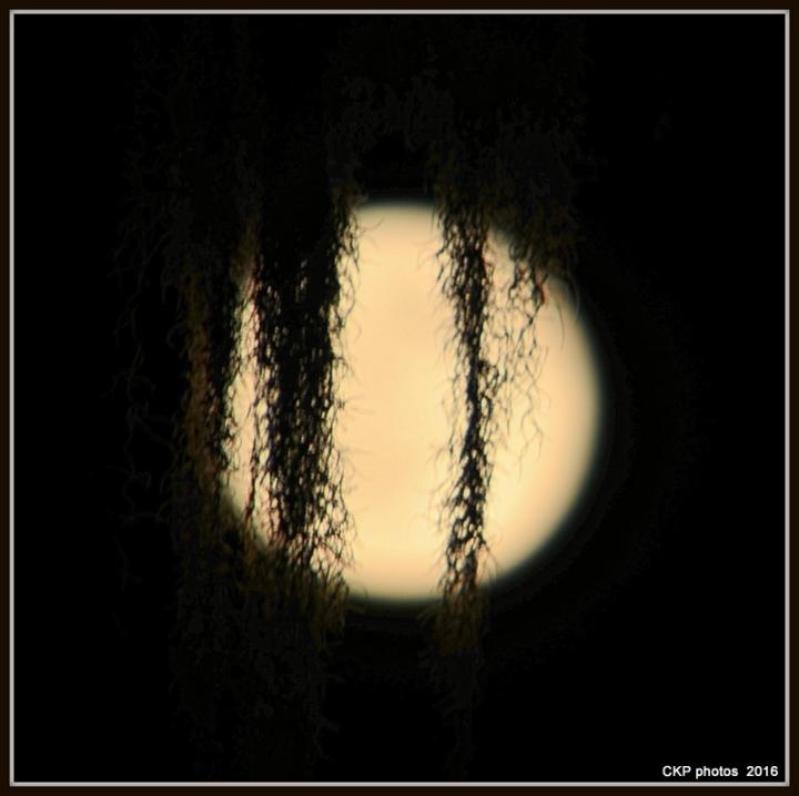 moon and turtles aug 2016 019