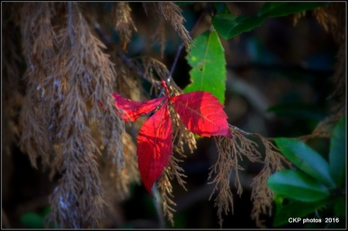 And red moments