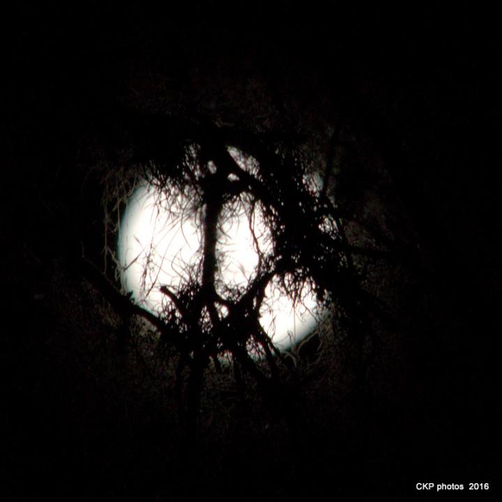witchy-terror-moon-032-nef