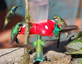 Little hummers