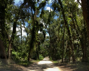 The road leading to Bullow Plantation ruins