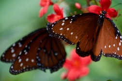 Visiting the butterfly gardens